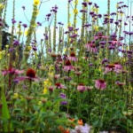 herbaceous-border-waterperry_l
