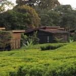 nyungwe-forest-lodge-01