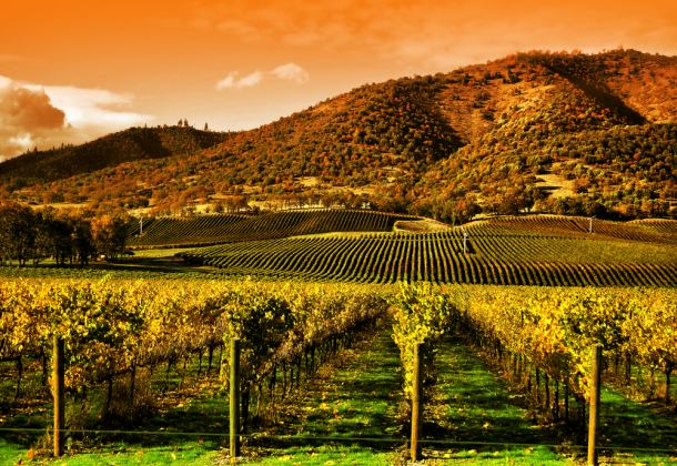 vinogradi-toscana