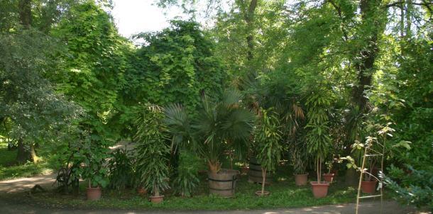 botanicki-vrt-zagreb-04