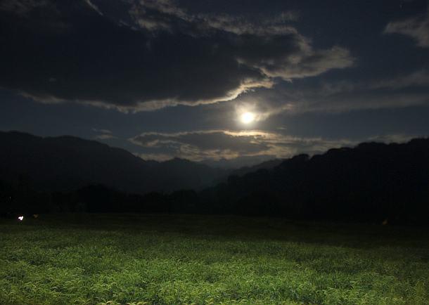 plantaza-po-noci
