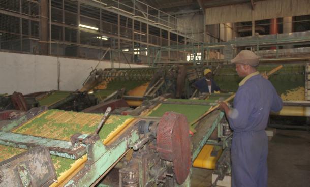 tvornica-caja-proizvodnja