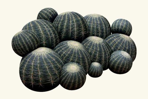 balari-cactus