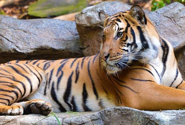 san-diego-zoo
