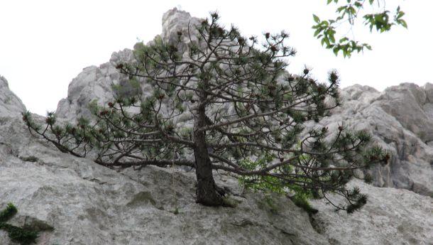 Paklenica stijene