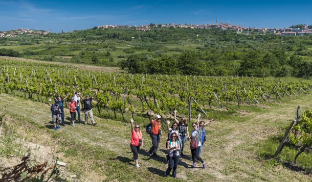 istria-wine-walk-1