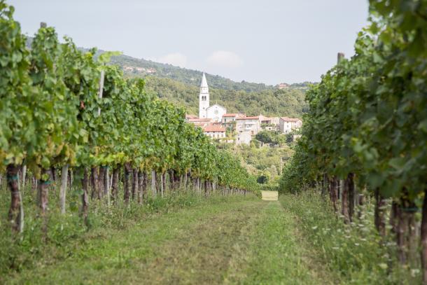 vipavska-dolina-1