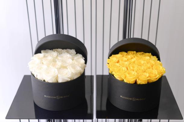 blossom-bloom-1
