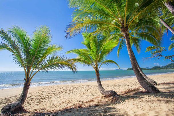 palm-cove-australija