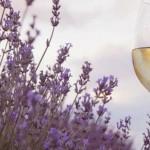 vino-ljeto
