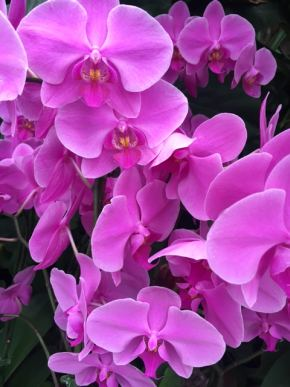 orhideja-8