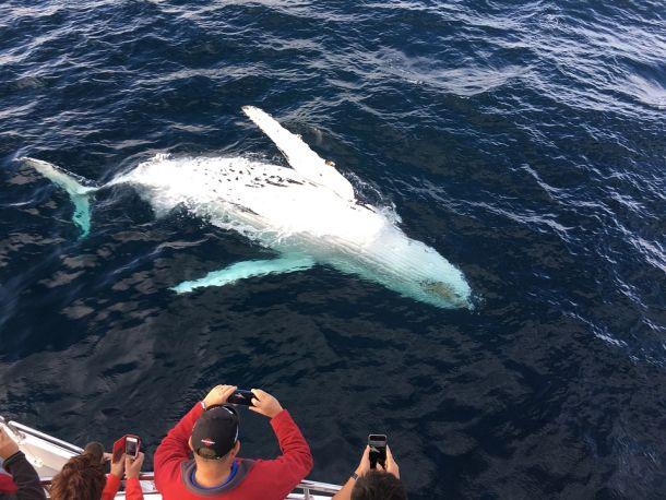 gledanje-kitova