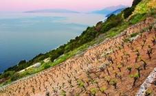 Vinski biseri Hrvatske