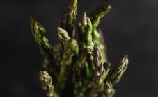 Saznajte sve o omiljenom bljuštu i ljekovitom svojstvu vilinog korijena