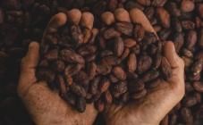 Kraljevi kakaa koji nam draškaju nepca u čokoladama