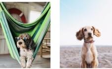 Pet najboljih plaža za pse u Hrvatskoj