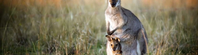 Australija najpoželjnija zemlja za život