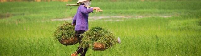Volite zeleno – Vijetnam je pravo mjesto
