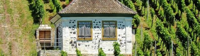 Najbolji vinski podrumi Istre
