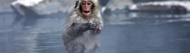 Mini priča o neobičnim snježnim majmunima