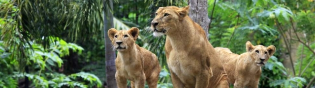 Bali safari i Marine park