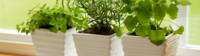 Vaša kuhinja kao mini vrt