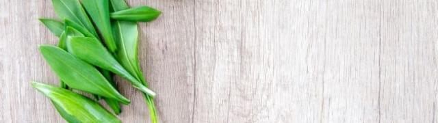 Medvjeđi luk: prava proljetna poslastica