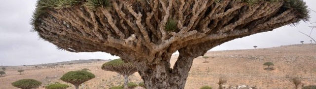 Otočje Socotra