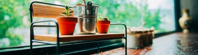 Top 7 najboljih biljaka za zdravlje žena