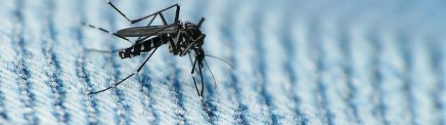 Koga biraju komarci