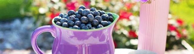 Uloga flavonoida ili P vitamina u zaštiti tijela