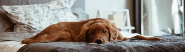 Stariji pas treba imati posebnu brigu i pažnju: savjeti veterinarke Tomljenović