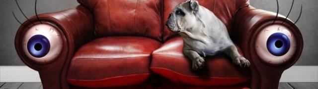Sedam omiljenih dog friendly odredišta u Zagrebu
