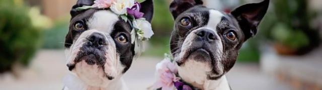 7 savjeta za vlasnike pasa koji imaju višak kilograma