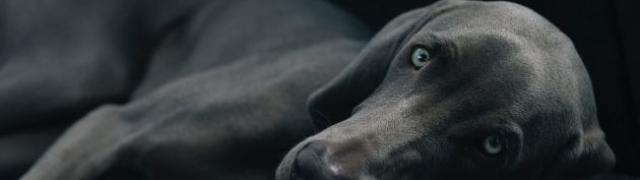 Alergija kod pasa i kako je prepoznati