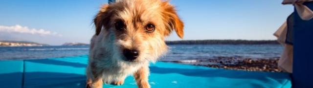 Psi na plaži Raba uživaju u psećem pivu