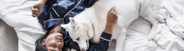 Zašto psi laju i što vam poručuju