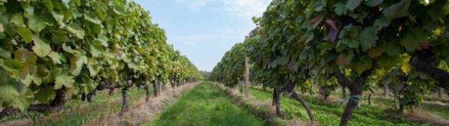 Kako će klimatske promjene transformirati vinski sektor?