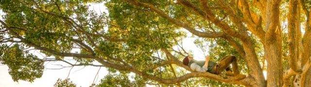 Posadi svoje drvo i dok si kod kuće