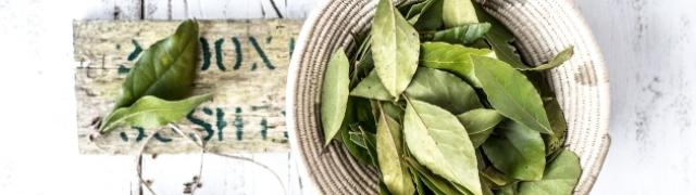 Kako spriječiti ugibanje kupovnog začinskog bilja?