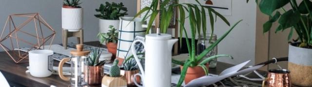 Ljekovita moć sobnog bilja: Superbiljke koje uzvraćaju ljubav