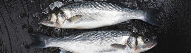 Brancin ili lubin recept s ribom na drugačiji način