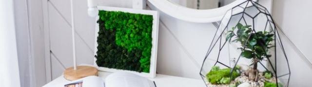 Napravite terarij za kućne biljke u 5 jednostavnih koraka