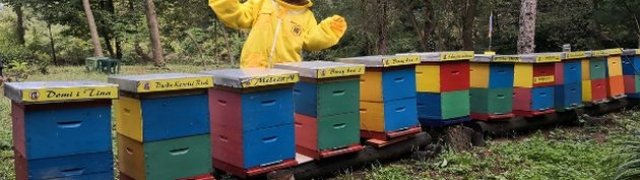 Zujanje uz pčele i oldtimere