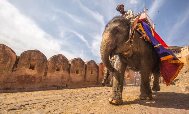indija slon