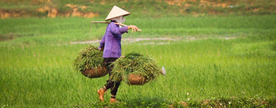 vijetnam 5