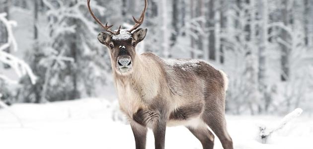 Finska domovina Djeda Mraza