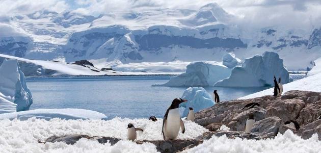 antarktik zanimljivosti pingvin