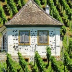 vinogradi-istre