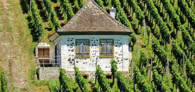 Najpoznatiji vinski podrumi Istre
